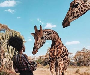 animals, giraffe, and girl image