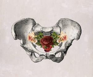 rose, bones, and hip image