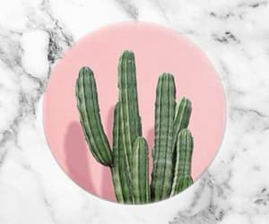 background, cactus, and pink image