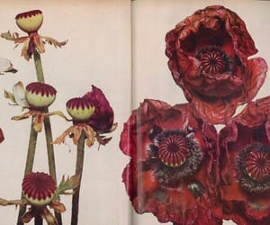 flowers, irving penn, and red image