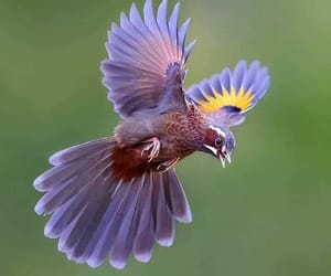 beautiful, birds, and colourful image