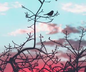 wallpaper, bird, and nature image
