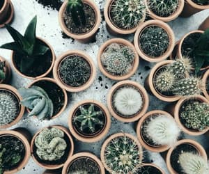 cactus, plants, and aesthetic image