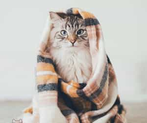 cat, cozy, and kitten image