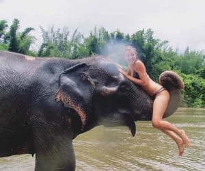 elephant, girl, and summer image