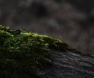 crimea, forest, and sevastopol image