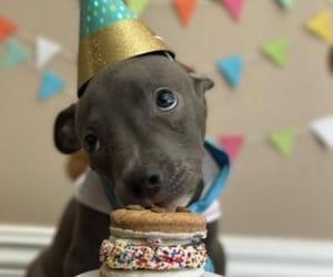 birthday, perris, and dog image