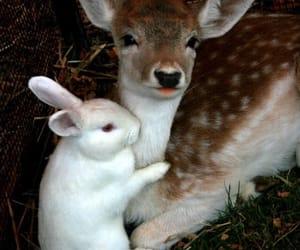 animal, deer, and bunny image