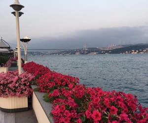 flowers, happy, and istanbul image