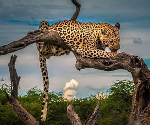 africa, beauty, and feline image