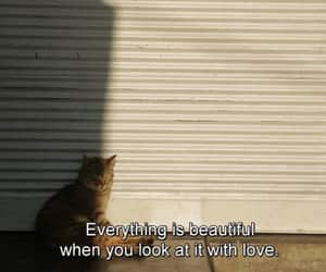 cat, beautiful, and quotes image