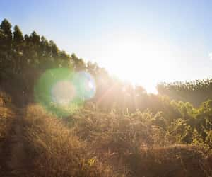 lens flare, sunrise, and trees image