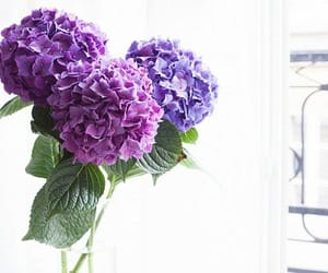 flowers and pretty image