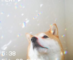 aesthetic, shiba, and alter image