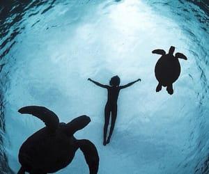 sea and turtles image