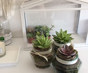 succulent, plants, and plant aesthetic image