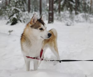 beautiful, winter, and dog image