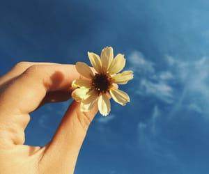blue, flor, and flower image