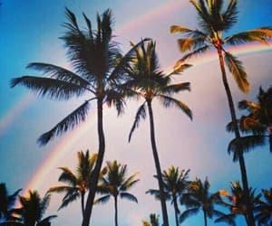 palm, 🌲, and rainbow image