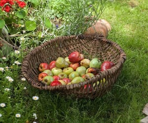 apples, food, and nature image