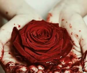 blood, rose, and red image
