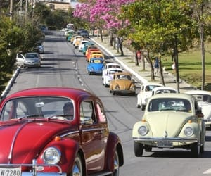 beetle, cool, and picture image