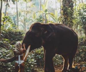 elephant, jungle, and travel image