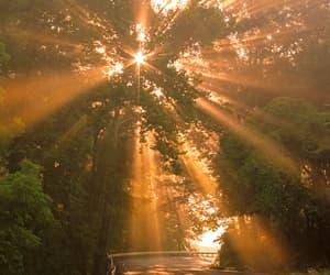 sun, nature, and tree image