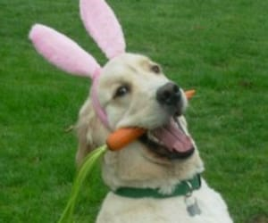 dog, carrot, and funny image