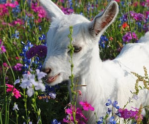 flowers, lamb, and animal image