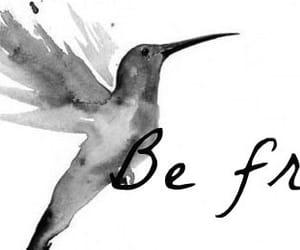 bird, black and white, and faith image