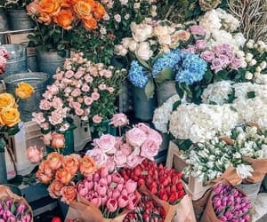flowers, rose, and colors image