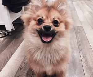 beautiful, dog, and happy image
