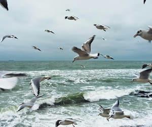 ocean, sky, and waves image