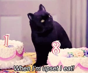 cat, gif, and eat image