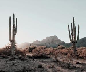 cactus, nature, and desert image
