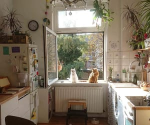 cat, plants, and kitchen image