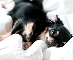 adorable, animal, and dog image