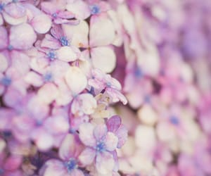 flowers, lilac, and pastel image