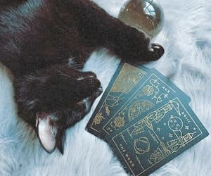 cat, witch, and photography image