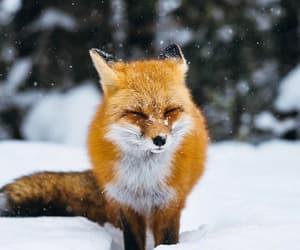 animal, awwww, and beauty image