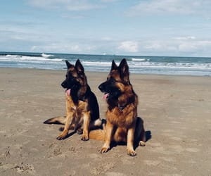 dogs, german, and ocean image