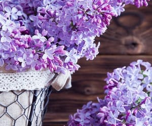 flowers and lilas image