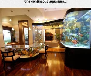 aquarium, awesome, and neverending image