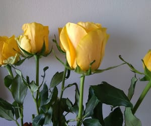 colors, rose, and yellow image