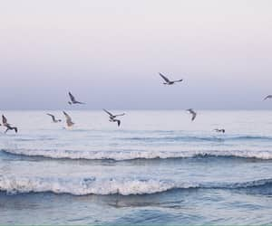sea, bird, and ocean image