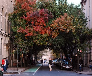 tree, city, and street image