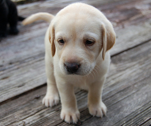 animal, puppy cute, and dog image