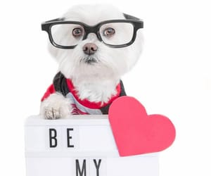 dog, heart, and valentine image