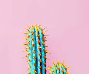 pink, cactus, and wallpaper image